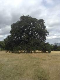 greenwich-onetreehill