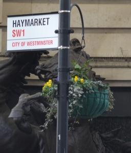 Haymarket crop